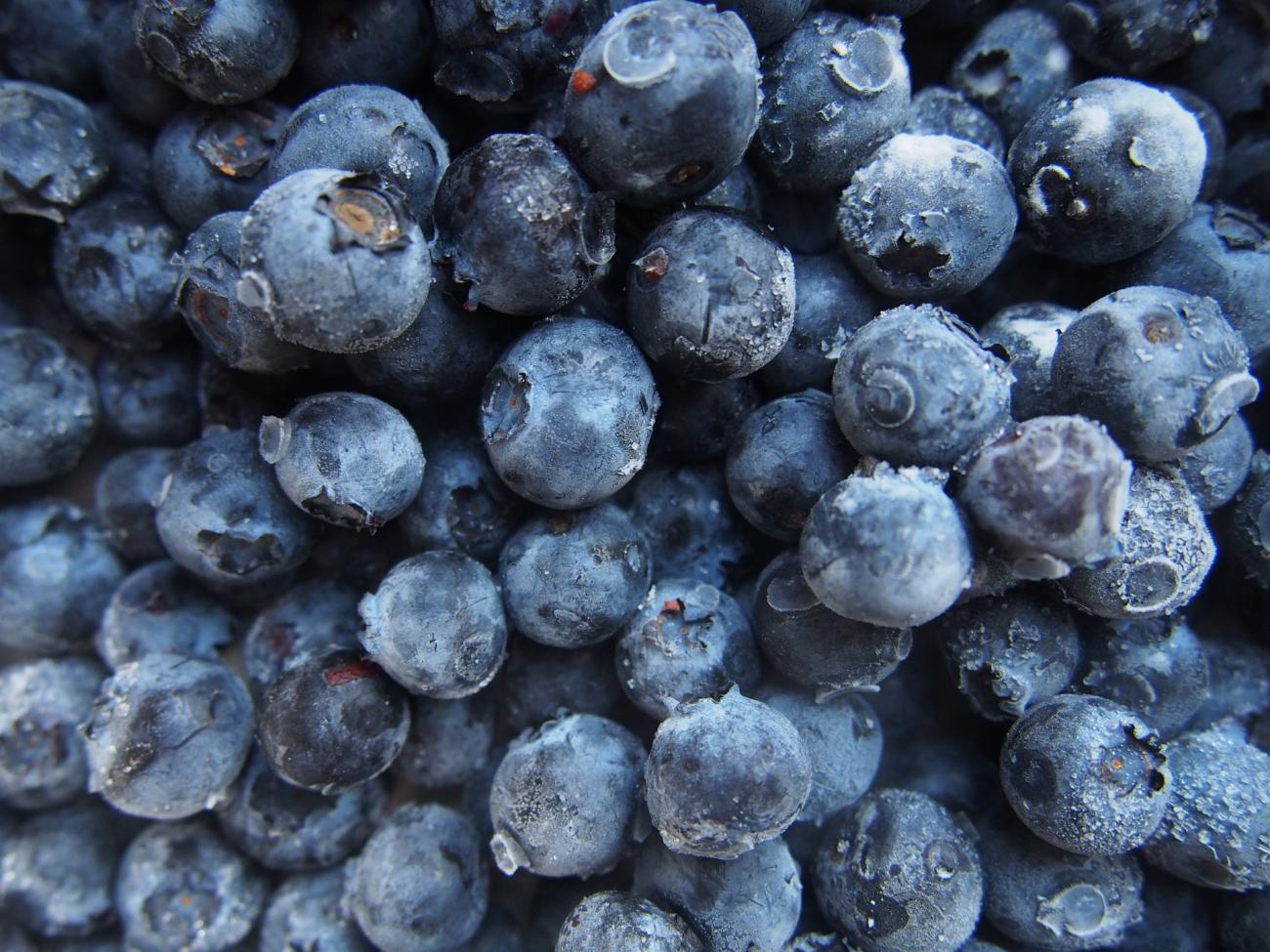 how-to-freeze-blueberries