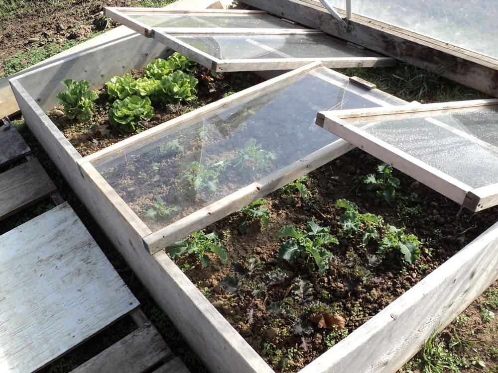 Cold Frames in Hoop House