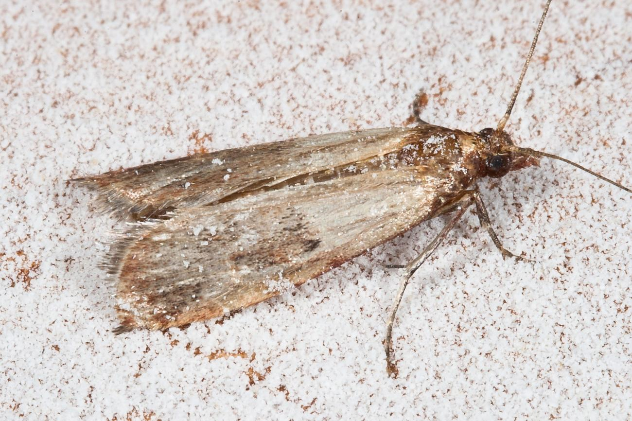 How to Get Rid of Pantry Moths | The Old Farmer's Almanac