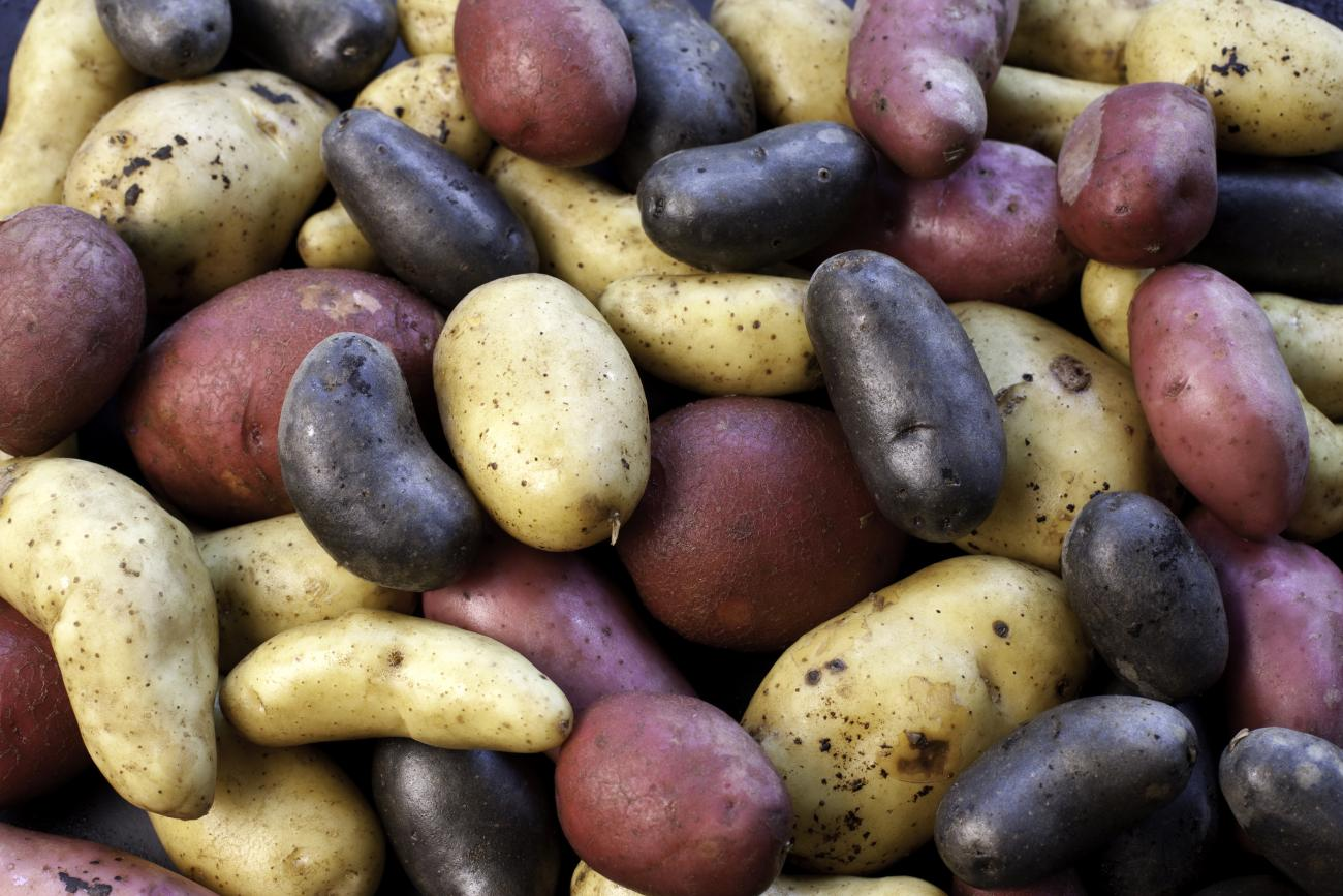Potatoes: Red, White, and Blue