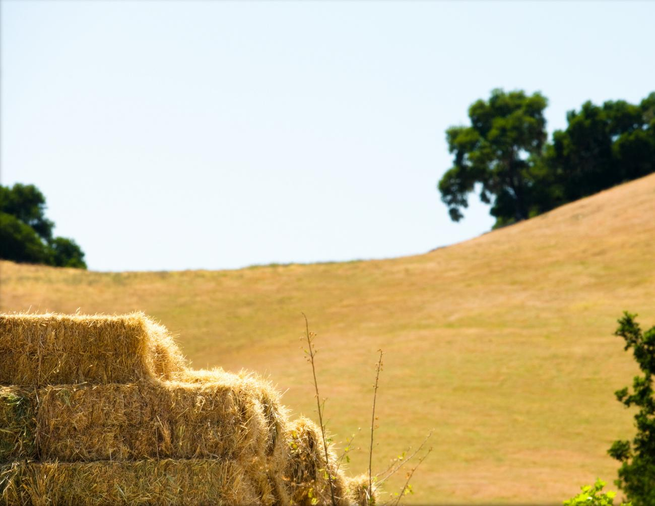 Straw turns gold-Thinkstock