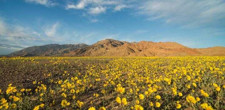 Wildflower Super Bloom Out West