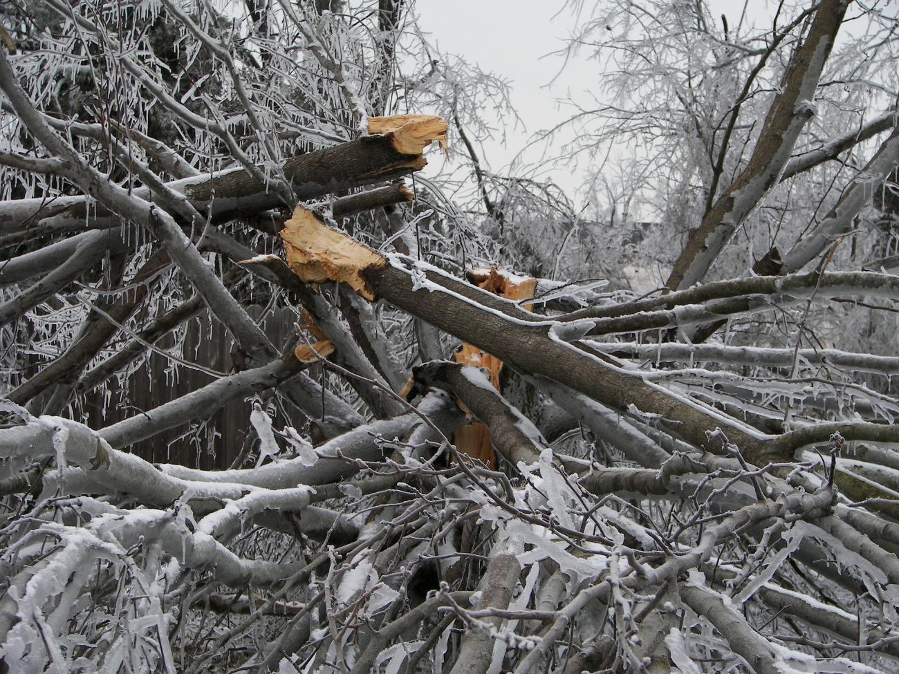 Ice Storm Tree Destruction