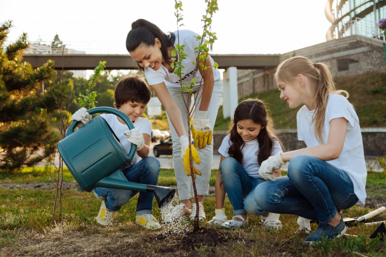 tree planting tips for fall old farmer s almanac