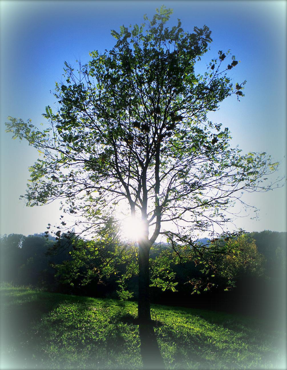 Tree with Sun - Thinkstock