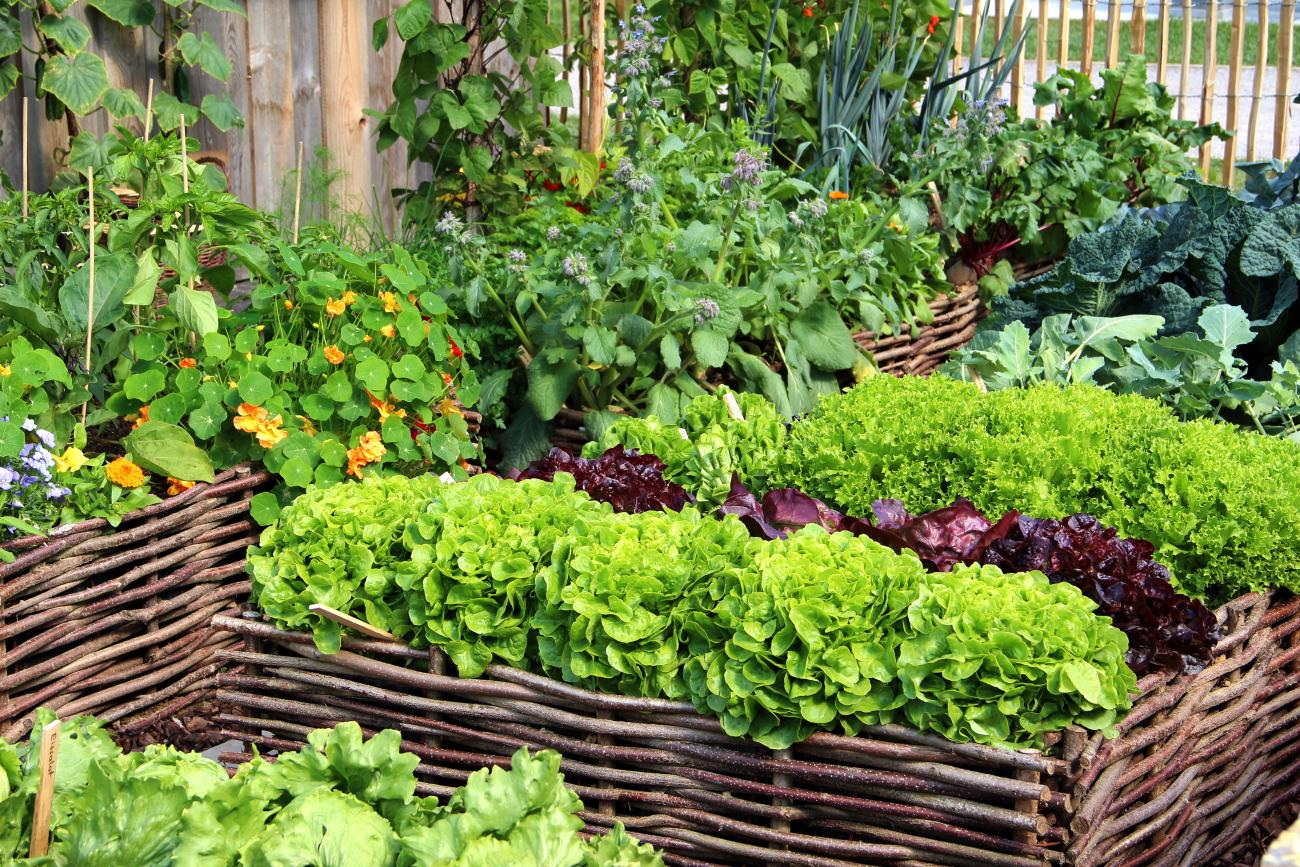 Four Bed Crop Rotation For Small Gardens Old Farmer S Almanac