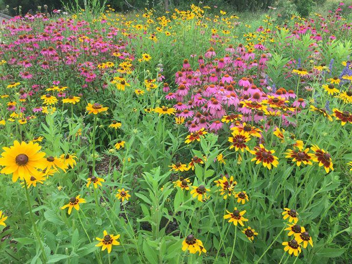 Wildflowers Native List