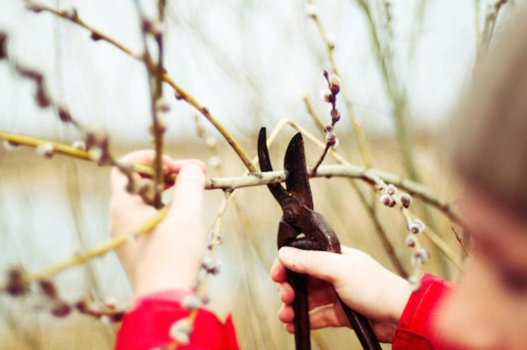 Winter Pruning Guide For Trees And