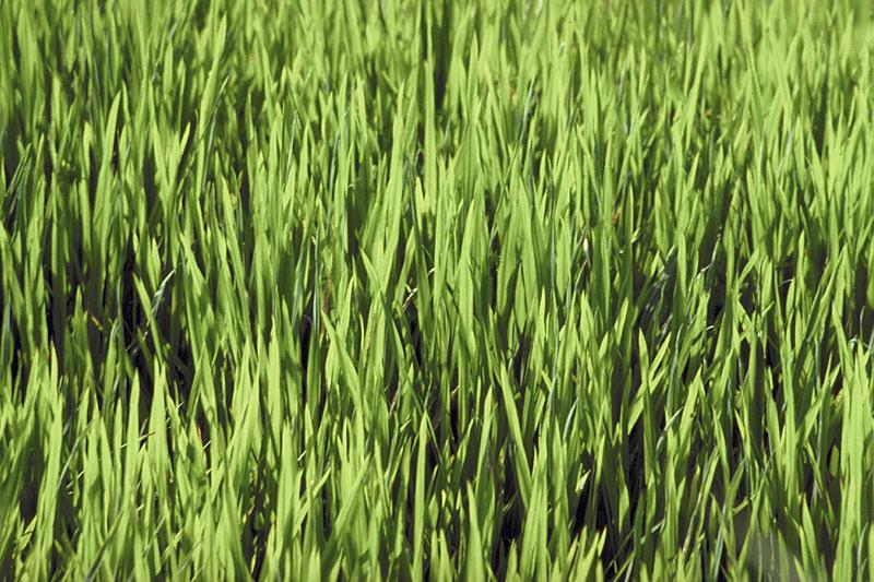 Lawn Care Tips Seeding Fertilizing Watering Mowing