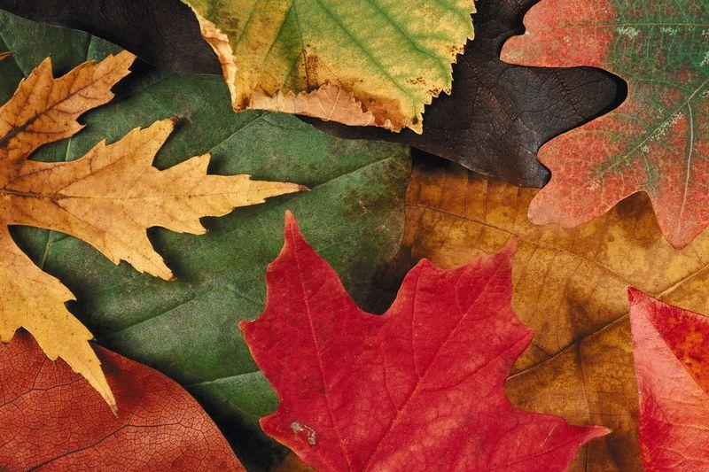 Autumn Leaves Montage