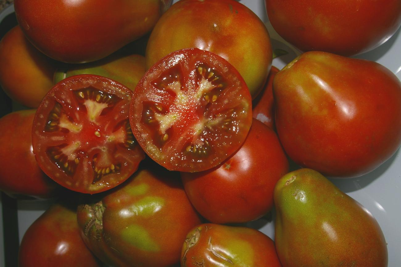 Tomato Trials: from blue to grafted