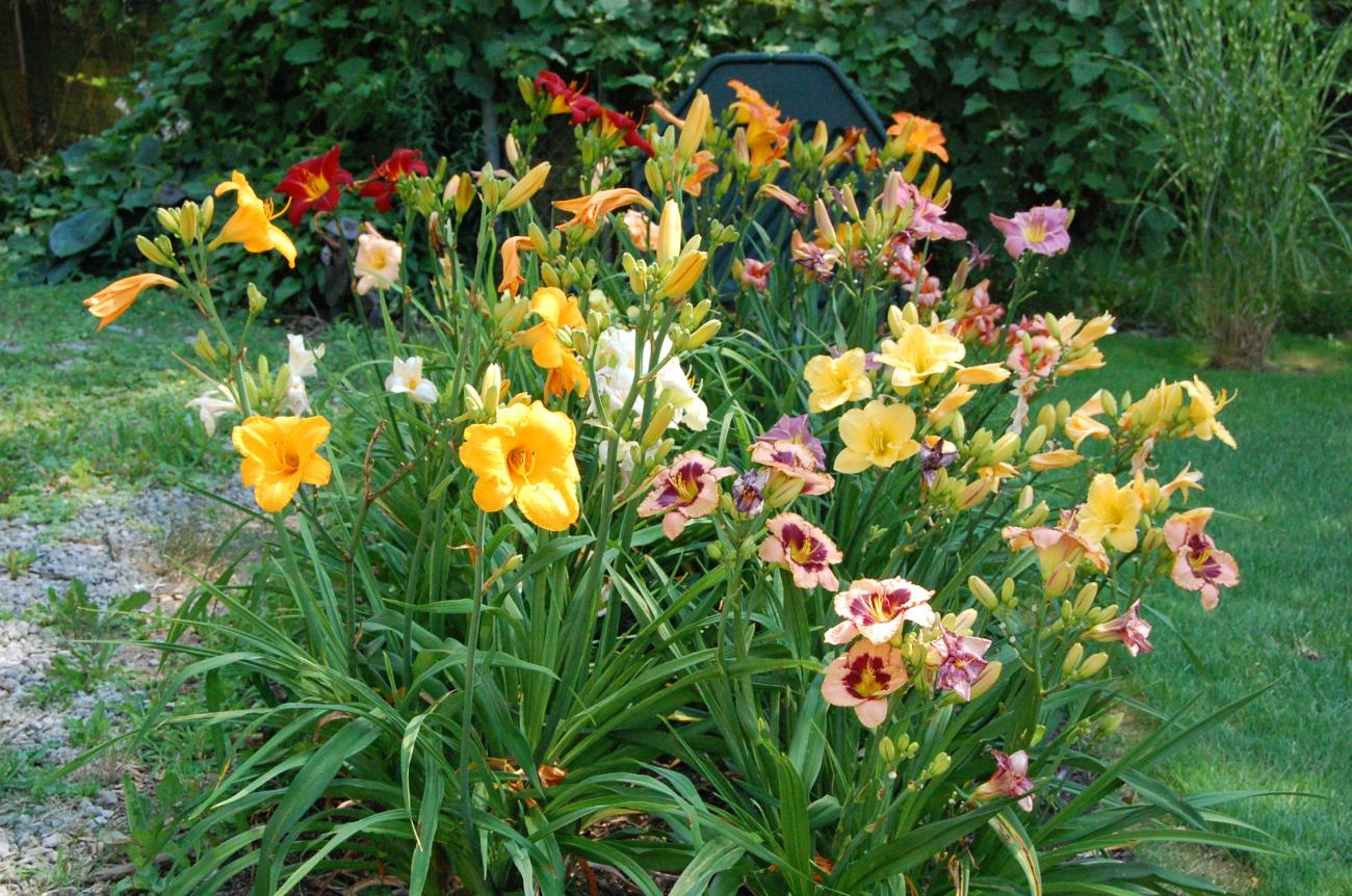 Outdoor Daylily Bouquet