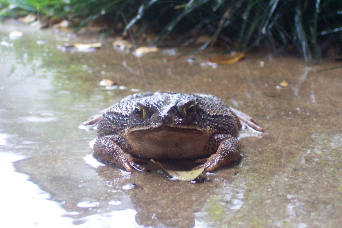 Frog in the Rain