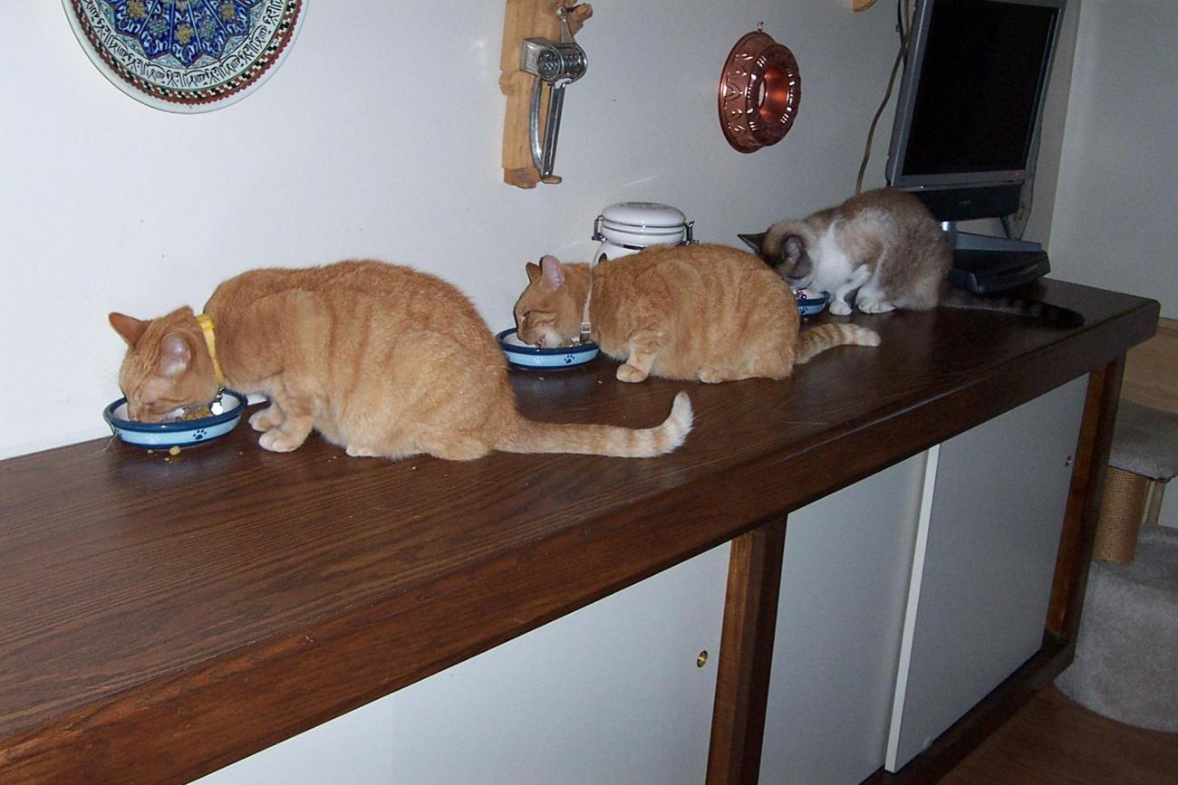 Cats Dinner Time