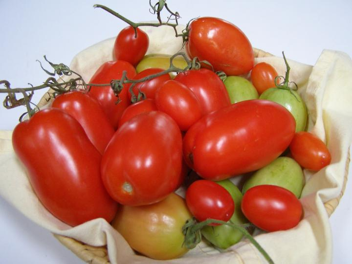 Tomatoes for Kitchen Garden