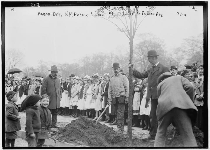 Arbor Day tree planting in NYC, 1908. Photo from Library of Congress.