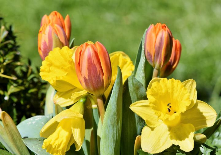 Planting bulbs for spring flowers fall flower bulbs the old bouquet 33082981920fullwidthg mightylinksfo