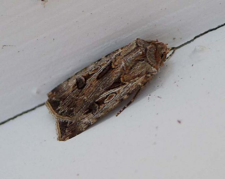 Moths In House During Winter House Plan 2017