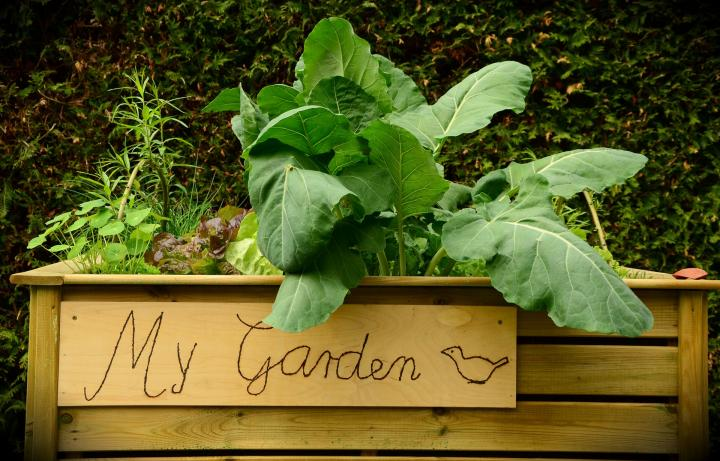 How to Build a Raised Garden Bed: Planning, Building, and Planting ...