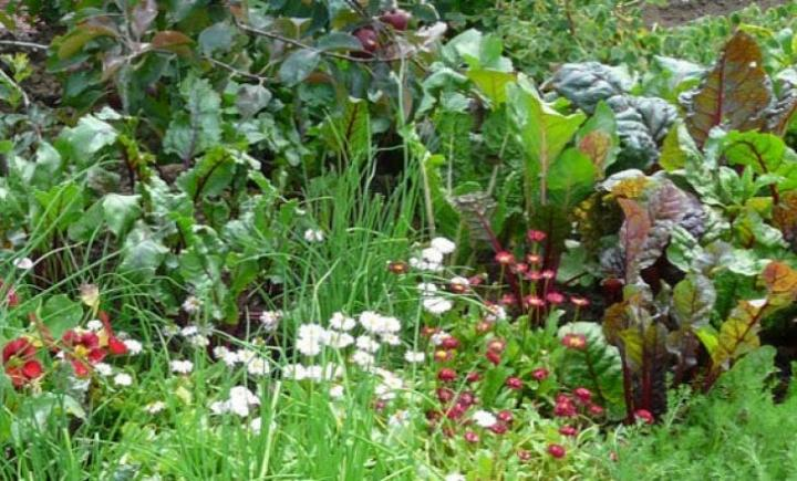 10 Tips for an Eco-Friendly Garden | Old Farmer\'s Almanac