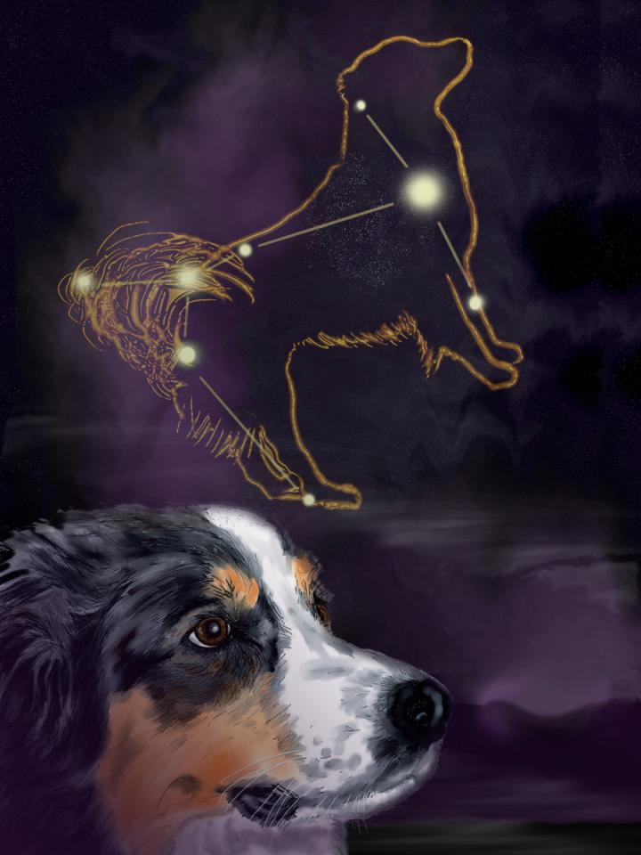 dog-star-sirius-canis-major.jpg