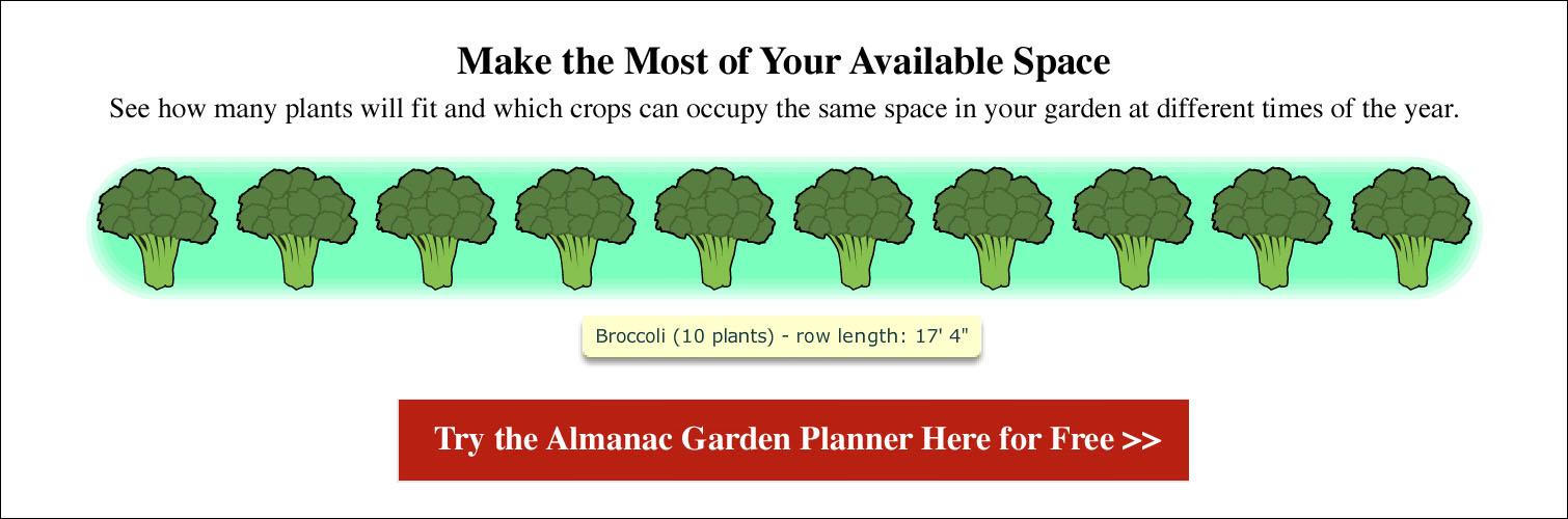 Spacing for Broccoli
