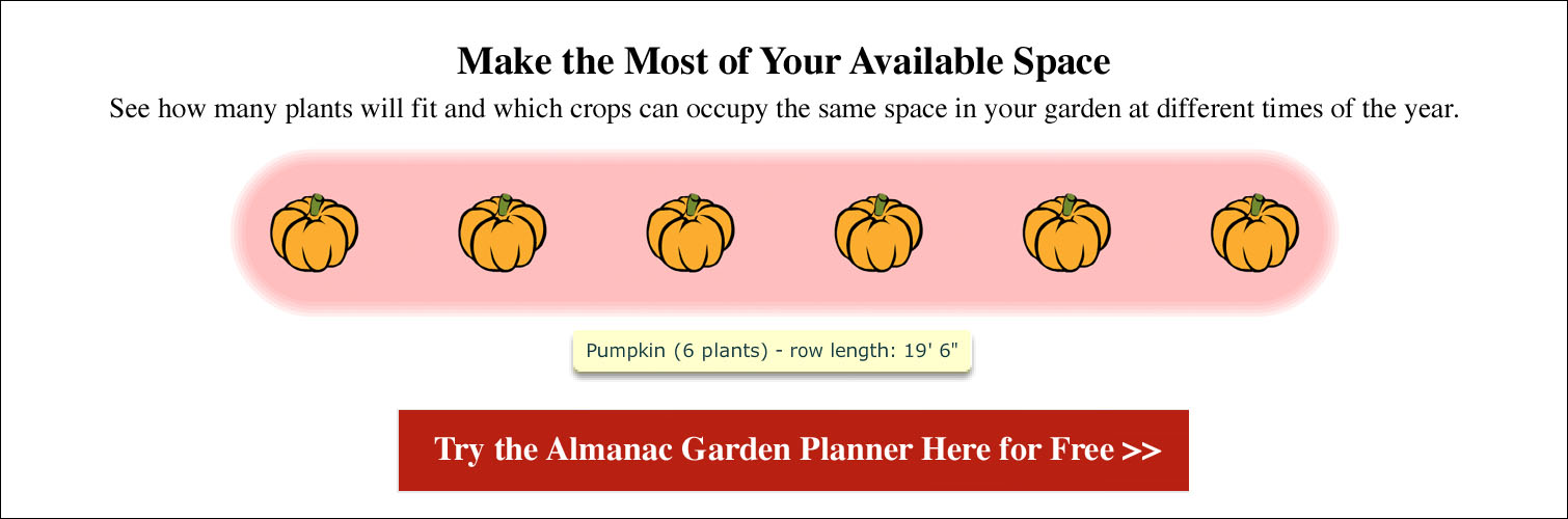 Spacing for Pumpkins