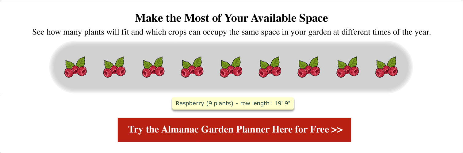 Spacing for Raspberries