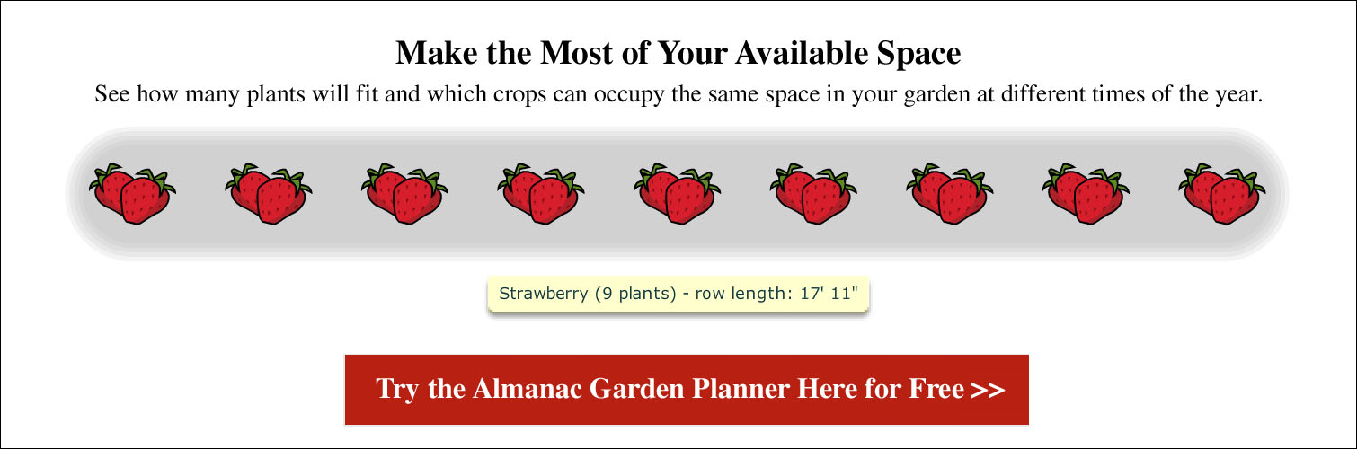 Spacing for Strawberries