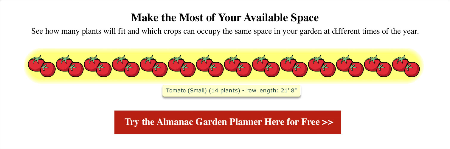 Spacing for Tomatoes