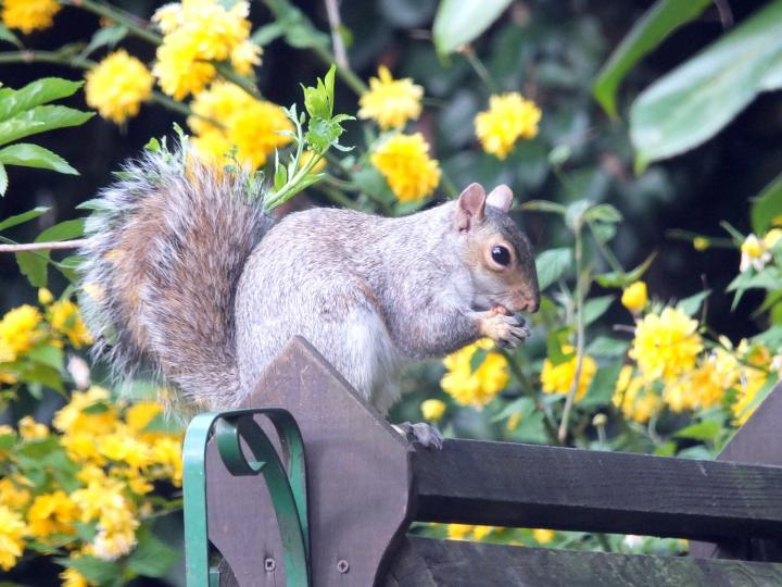 Keep Squirrels Out Of Garden