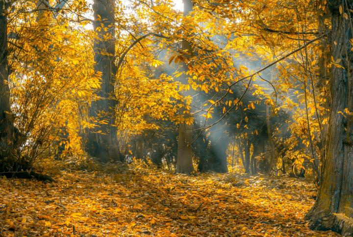 Indian Summer: What, Why, and When? | The Old Farmer's Almanac