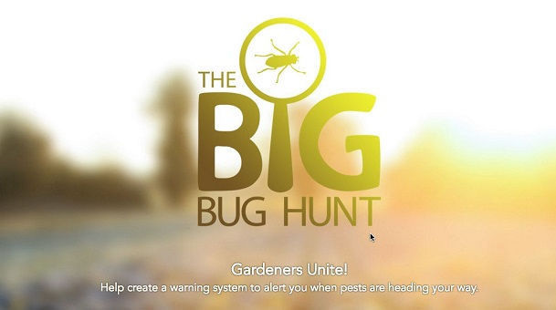 big-bug-hunt-header.jpg