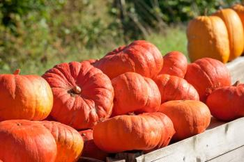 cinderellas-carriage-pumpkin-variety.jpg