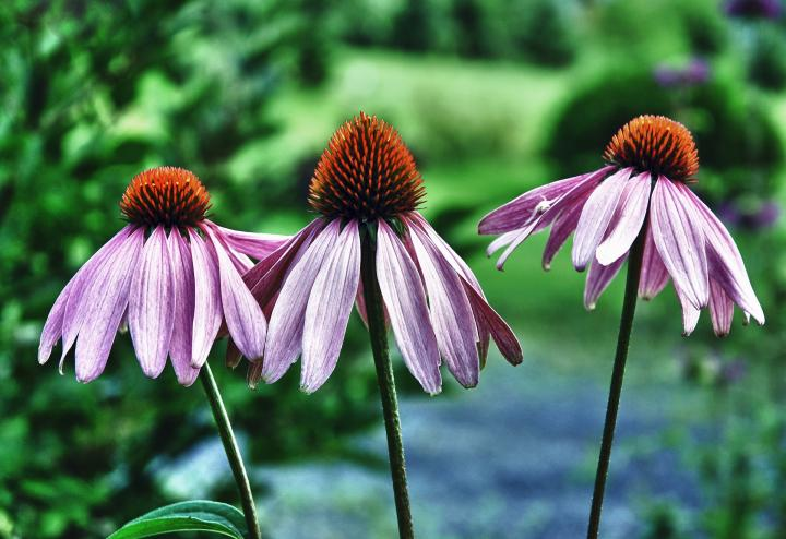 Easiest Perennials To Grow How To Have An Easy Garden The Old