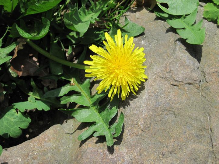 Common Garden Weed Identification: Pictures and Descriptions | The