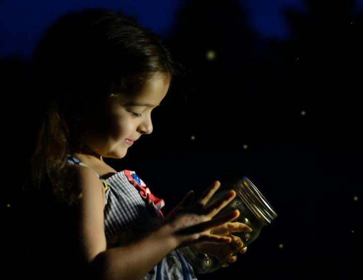 fireflies-jar-attract-lightning-bugs.jpg