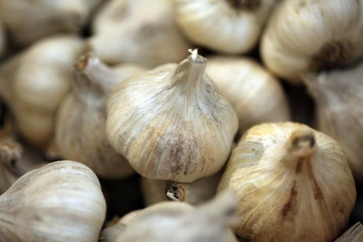 When To Plant Garlic In The Fall Old Farmer S Almanac