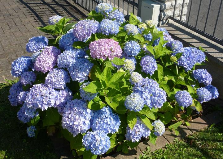 How To Use Hydrangeas In A Bouquet