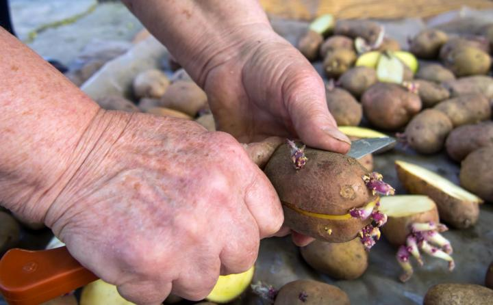 Man planting potatoes. Photo by tanyss/Getty Images.