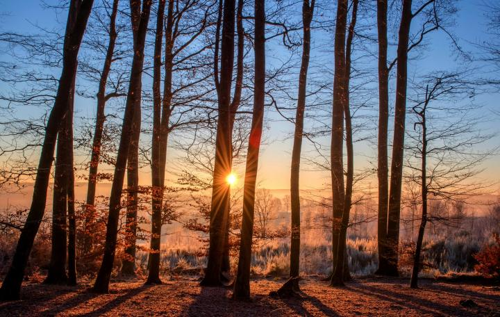 Winter forest sunset