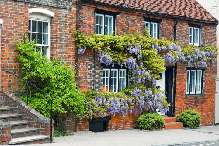 Image result for trellis wisteria