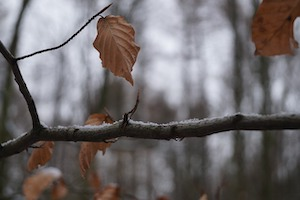 twig and limb