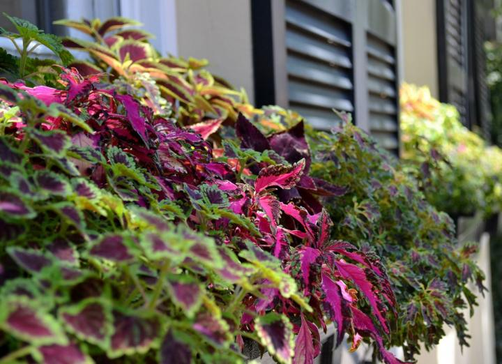 Best Plants For Window Boxes The Old Farmer S Almanac