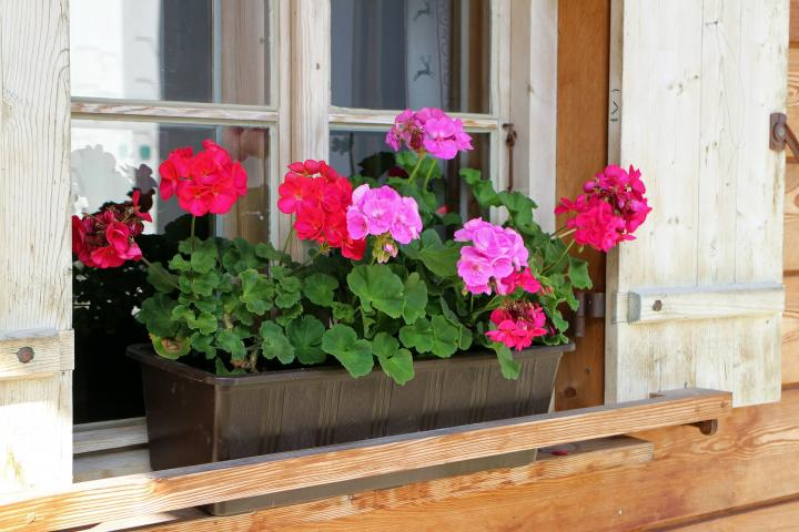 Best Plants For Window Boxes Sun Or Shade The Old Farmers Almanac
