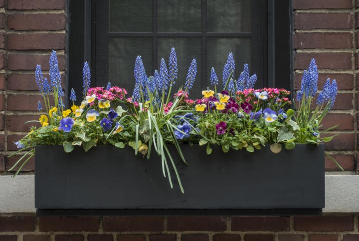 Flowers For Window Boxes Sun And Shade Loving Plants The Old Farmer S Almanac