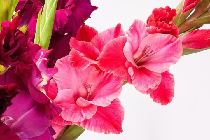 76a8aa348d43c Birth Month Flowers and Meanings | What's Your Birth Flower? | The ...