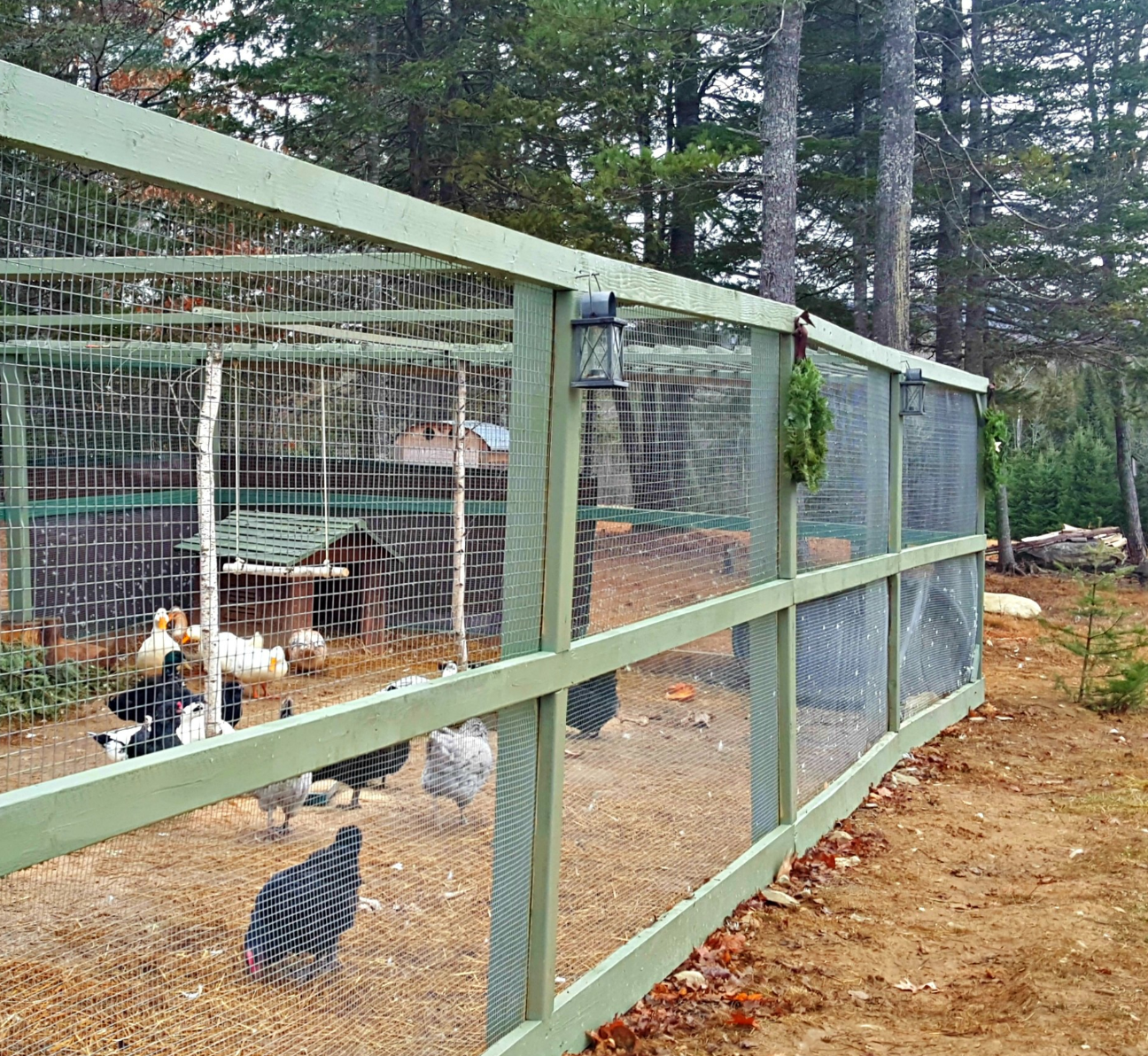 How To Build A Predator-Proof Chicken Run