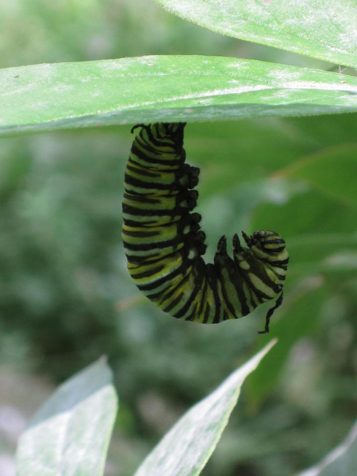 butterflies_and_caterpillars_006_full_width.jpg