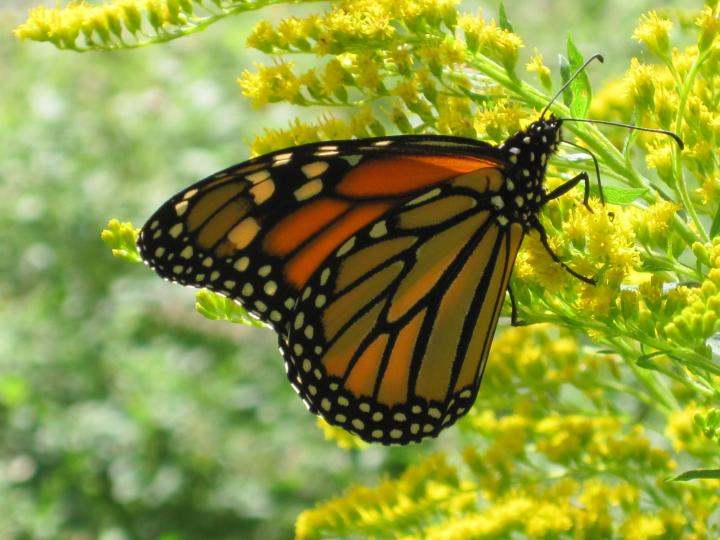 butterflies_and_caterpillars_012_0_full_width.jpg